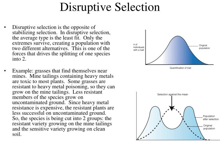 stabilizing selection example in humans