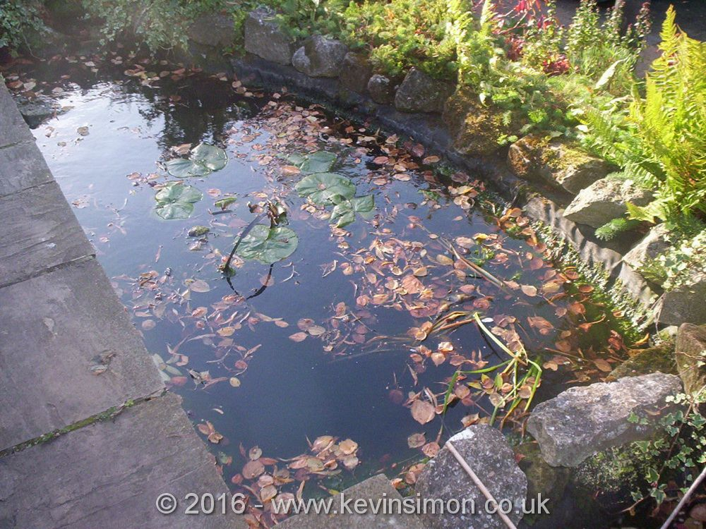 pond is an example of