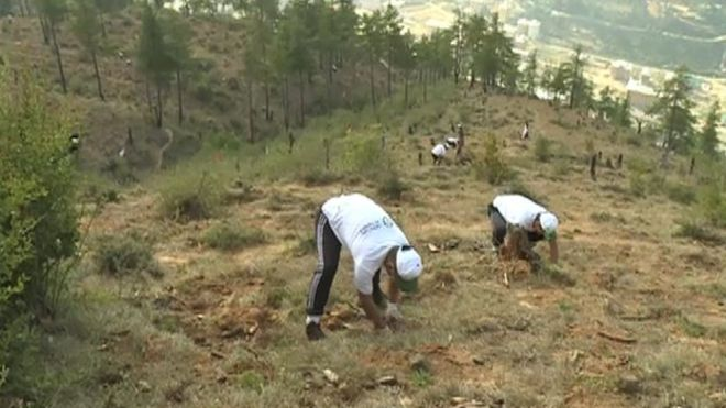 replanting trees is an example of