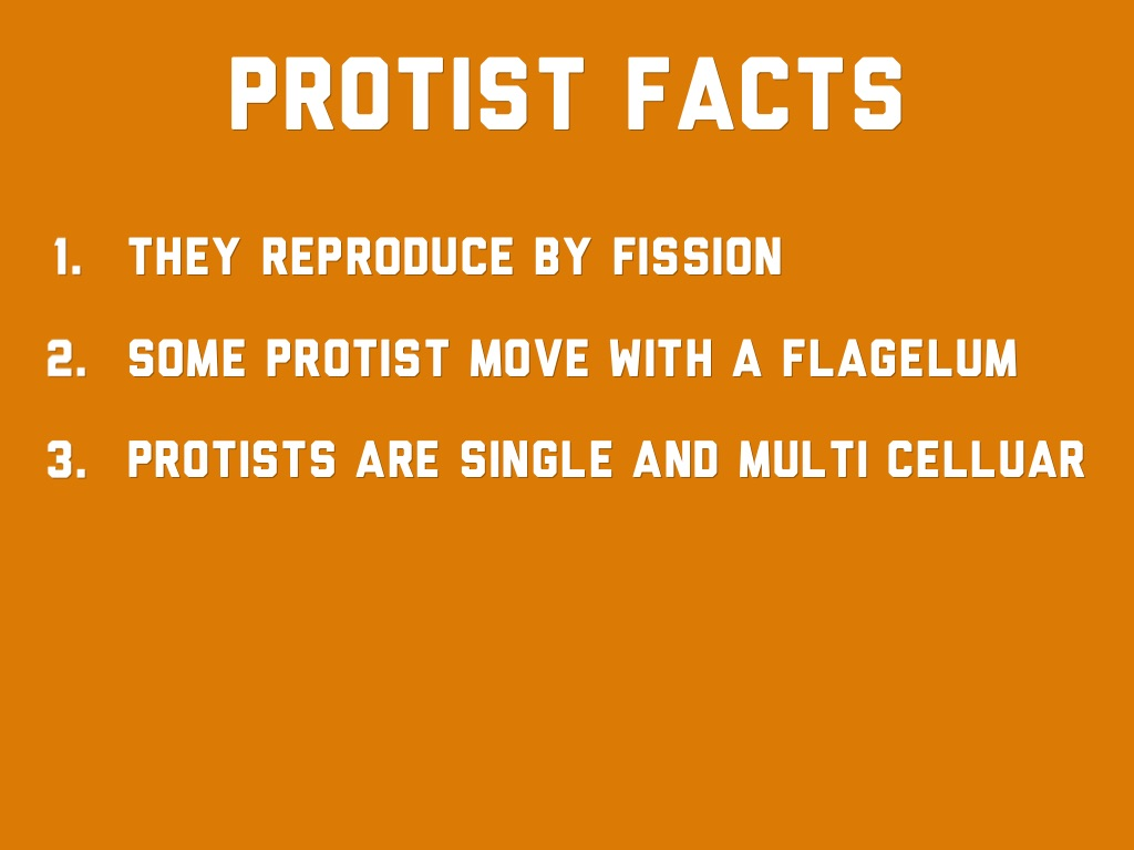 what is an example of a protist organism