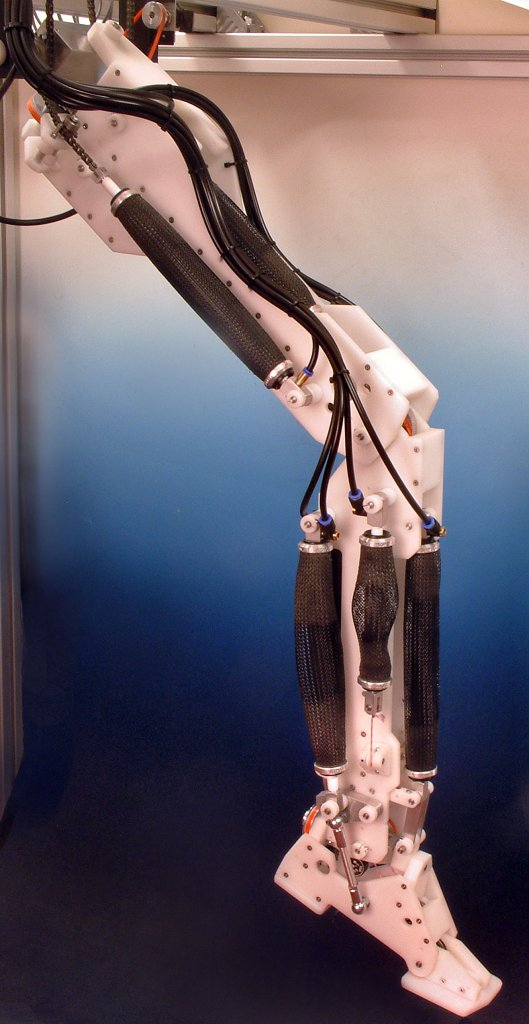 the mechanical leg is an example of
