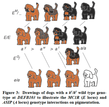 definition and example of purebred
