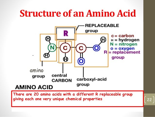 enzymes are a specific example of what macromolecule